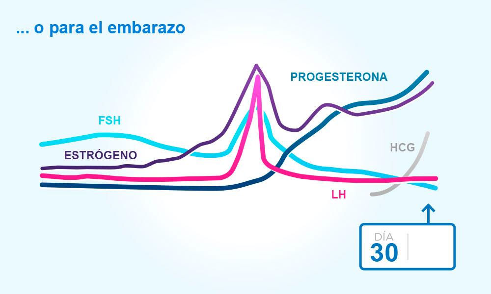 cual es la etapa mas fertil del ciclo menstrual